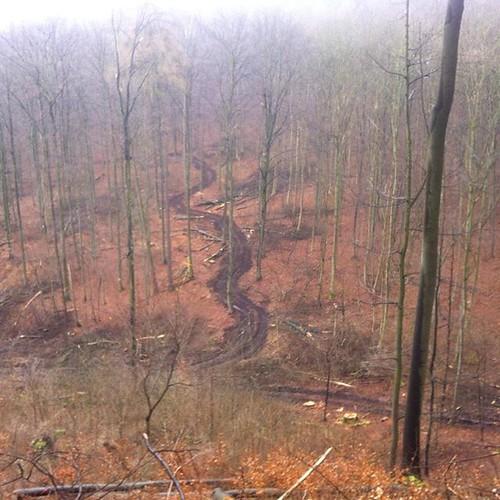 Forstweg an der #Pferdekrippe/loggers' path at...