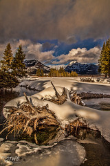 Soda Butte Ck. driftwood (chasingthewildoutdoors) Tags: wood trees winter snow storm mountains cold nature water beauty clouds creek canon landscape winterscape yellowstonepark