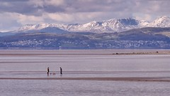 Dog walkers on Morecambe Bay. Lake District snow topped mountains in the background (Gidzy) Tags: winter sea england snow seascape mountains english tourism beach dogs landscape coast march seaside spring sand waves tide sunday lakedistrict lancashire line estuary british morecambe touristattraction natures dogwalking grangeoversands snowcappedmountains hestbank morecambebay dogfriendlybeach