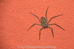 Argentinien_Insekten-92 (fotolulu2012) Tags: tierfoto