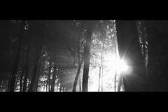light (r_if) Tags: bw sun star olympusep1 lumix20mm17