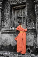 Chiang Mai Boy Monk (and his Cat) (R. Tgern) Tags: boy orange thailand monk chiangmai