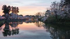 evening tone (peaceful-jp-scenery) Tags: flower cherry spring sony blossoms   sakura       takadapark a7r   emount  7r ilce7r fe24240mmf3563oss takadajoucastle