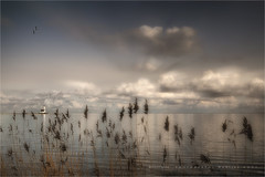 Soft focus (Marijke M2011) Tags: winter sky lighthouse lake reed water clouds outdoors island vuurtoren emptiness marken ijsselmeer touristic markermeer grauweganzen hetpaard
