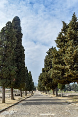 Tree Lined Lane (simonevanbergen) Tags: tree architecture garden spring spain ruins roman mosaic seville structure italica svb romanemperor simonevanbergen