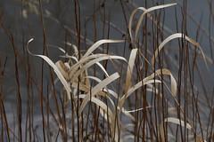 Near Yauza river, Moscow (photopotam) Tags: grass moscow april yauza oldgrass