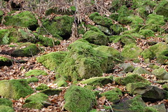 medieval woodland (Queen Circe) Tags: forestofdean rockyoutcrop ancientforest medievalwoodland rocksovergrownwithmoss