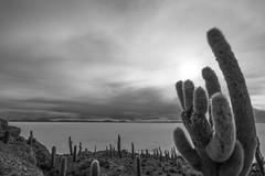Cactus island (yoskinomura) Tags: cactus blackandwhite bw sun dry bolivia planet saltflats uyuni