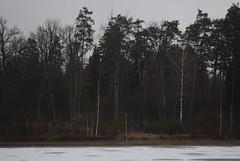 Treeline (modestmoze) Tags: blue trees winter sky plants brown white lake snow black ice nature grass outside outdoors grey spots treeline bushes lightpole lithuania dense 2016 alytus 500px