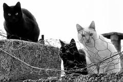 Cuidado, Nos estn vigilando!!! (Egg2704) Tags: naturaleza cats animal cat gatos gato felinos felino animales animalia eg2704