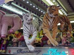 Tiger Prizes (EllenJo) Tags: carnival arizona animals digital rural fairgrounds pentax tiger az fair cottonwood prizes verdevalley shootingstar cottonwoodarizona 2016 april30 smalltownlife verdevalleyfair 86326 ellenjo ellenjoroberts coldandrainynight plushtiger springtimeinaz pentaxqs1 50thannualverdevalleyfair