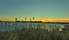 Prairie Sky (Lori Bote) Tags: sunset sky water field silhouette weeds outdoor farm wideangle farmland land grasses prairie slough wateringhole settingsun bulrushes farmfield brightcolours colourfulsky prairiescene