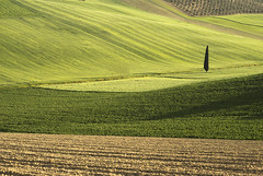 straight (simoncini.nicola) Tags: sunset panorama colour tree green nature alberi digital relax landscape 50mm golden countryside spring haze nikon outdoor country campagna hour nikkor f18 sole recanati marche d60
