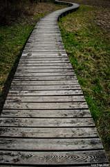 Pontile 01 (Luca Frigo) Tags: lago natura lamar pontile terlago