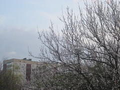IMG_4061 (Souls_Eater) Tags: trees windows sky building speed cherry evening spring walk ukraine wires apricot everydaylife donetsk