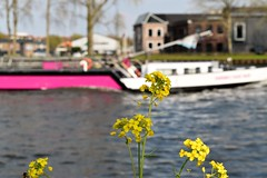 Passing Traffic (Quetzalcoatl002) Tags: flowers yellow boat focus traffic vaart freightboat