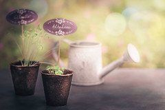 Be patient and wait (RoCafe (very busy a few days)) Tags: life garden spring still bokeh seed pastels sprout germination nikond600 nikkormicro105f28