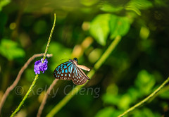 Taiwan-121113-209 (Kelly Cheng) Tags: travel color colour green tourism nature animals horizontal fauna butterfly daylight colorful asia day taiwan vivid nobody nopeople colourful traveldestinations  northeastasia