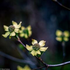 (dmillhol) Tags: nature outdoors washingtonstate squarecrop 1x1 washingtonoutdoors pentaxk7 dawncarlson