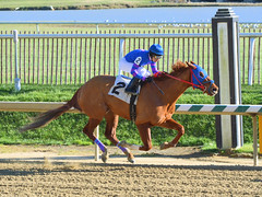 2016-01-03 (50) r4 Larry Mejias on #2 Love to Prospect (JLeeFleenor) Tags: photos photography md marylandracing marylandhorseracing laurelpark outside outdoors jockey   jinete  dokej jocheu  jquei okej kilparatsastaja rennreiter fantino    jokey ngi horses thoroughbreds equine equestrian cheval cavalo cavallo cavall caballo pferd paard perd hevonen hest hestur cal kon konj beygir capall ceffyl cuddy yarraman faras alogo soos kuda uma pfeerd koin    hst     ko  fourup maryland