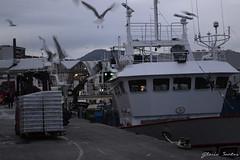 Movimiento en la lonja de Riveira (Glo Stos) Tags: mar trabajo galicia pescado gaviota lonja riveira marinero