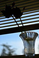 Parrot's (Reed 1949) Tags: macro tree window nikon vase 40mm glassware nikor parrottulips tulipsflowers nikond5200
