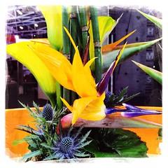 Exotic Bunch (Casey Hugelfink) Tags: flowers yellow calla blumen bamboo gelb bunch bambus disteln strelitzia blumenstrauss paradiesvogelblume