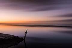Just one moor (Marty Friedel) Tags: longexposure morning water silhouette sunrise landscape au australia melbourne victoria williamstown filter lee altona nisi kororoitcreek