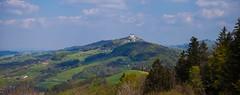 _MG_0369 (TobiasW.) Tags: austria blossom blossoms pear flowering blte niedersterreich obersterreich blten 2016 birnbaum upperaustria loweraustria mostviertel birnbaumblte weises moststrasse moststrase peartee