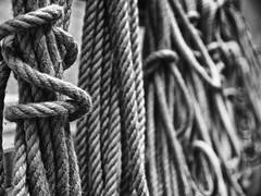 Quello che ci lega (Lumase) Tags: bw monochrome studio rope knots