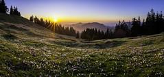 Rmisgummen (PhiiiiiiiL) Tags: sunset panorama landscape switzerland crocus emmental vernus rmisgummen