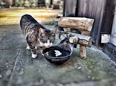 watering place for my cats (*Nils aus Kiel*) Tags: cats pets inspiration reflection nature water animals tiere woodwork diy recycled handmade drinking paws katzen upcycled