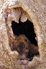 Hungry tree (cheryl.rose83) Tags: tree hole