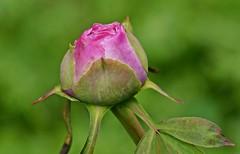 Spring 2016 - 854 LBG (Lostash) Tags: life flowers plants nature gardens spring flora seasons leicesterbotanicalgardens