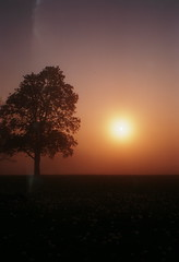 002 (derrickariley) Tags: light color 120 film abbey sunrise kodak junior medium format 100 leak conception 620 ektar