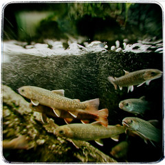 Fishes (jarjarbinks_2013) Tags: leicam4 film sunshineaquarium sunshinecity worldimportmartbuilding ikebukuro tokyo japan fishes