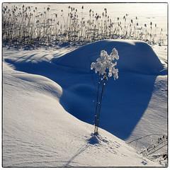 Frost (ver 2) (Krogen) Tags: nature norway norge natur norwegen olympus c7070 noruega scandinavia akershus romerike krogen noorwegen noreg skandinavia