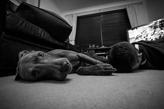 Me and Colin FDT II (#75) (RookieTom) Tags: blackandwhite bw dog television colin canon tv eyes january ground sofa tuesday groundlevel lightroom weimeraner facedown 2016 efs1022mmf3545usm 26thjanuary bringafriend fdt efslens eos60d facedowntuesday rookietom tomoskay 26012016