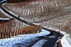 Winter in Vineyards (Habub3) Tags: schnee winter snow canon vineyard powershot weinberg g12 2016 habub3