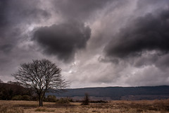 Tree (francesco_if ) Tags: winter sky italy lake tree clouds landscape grey viterbo vico oasi lagodivico