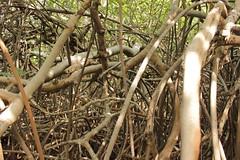 World Wetlands Day 2016 (NEPAJamaica) Tags: celebrate wetland nepa wwd 2016 uwi palisadoes