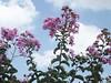23/366 Heaven (JessicaBelotto) Tags: flowers sky flores planta sol azul heaven day foto rosa dia céu days honey nuvens fotografia projeto fotográfico fotografando 366 alegrar 366daysofhoney 366diasnoano