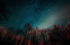Treeline (Alexis Ziemski) Tags: alexis ohio sky nature night square stars photography star nikon long exposure squareformat vanguard astrography stairtrails ziemski instagramapp