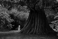 _DS62714.jpg (Ryan Kehoe Photo) Tags: family people usa newjersey princeton portfolio layla themes treesplants