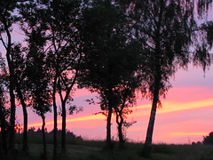...love the colors.... (elisabeth.mcghee) Tags: sky himmel abendhimmel afterglow abendrot plumtrees zwetschgenbume
