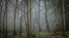 Gnarled Nature (Augmented Reality Images (Getty Contributor)) Tags: trees winter mist nature forest canon woodland landscape scotland countryside moss perthshire creepy lichen hdr