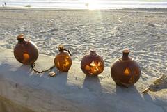 Seaweed Bulb Pumpkins (goldtrout) Tags: seaweed beach sand surf sandiego pumpkins boardwalk pacificbeach luna16