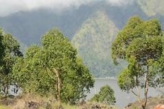 Landschaft in der Caldera des Batur; Bali, Indonesien (3) (Chironius) Tags: trees bali tree indonesia rboles boom arbres rbol albero bume arbre rvore baum trd indonesien batur aa