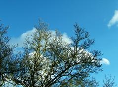 Nuages en branches (MAPNANCY) Tags: couleurs branches bleu ciel nuages arbre blanc