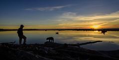 Man and His Dog At Driftwood Sunset (capemountain) Tags: sunset driftwood bracketed bracketted siltcoosoutlet